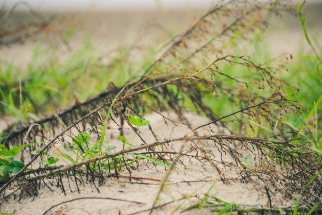 beachdazee (3 of 5).jpg